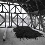 Articolul săptămânii: Eco Chilia. Centru de reintegrare în Deltă