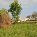 Articolul săptămânii: Arhigest: Casa din pământ, Ținutul Pădurenilor